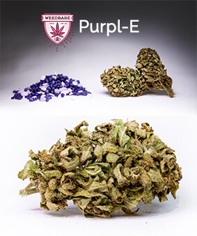 Purpl-E WeedBase